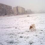 Ada, la gossa d'en Sergio al Barri de la Granja
